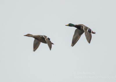 Mudhole Duck Club Jim Braswell 001