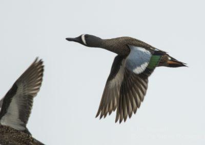 Mudhole Duck Club Jim Braswell 004