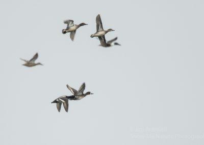 Mudhole Duck Club Jim Braswell 007
